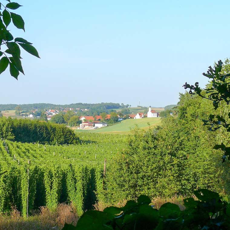 Hopfenfelder prägen die Landschaft um Mainburg